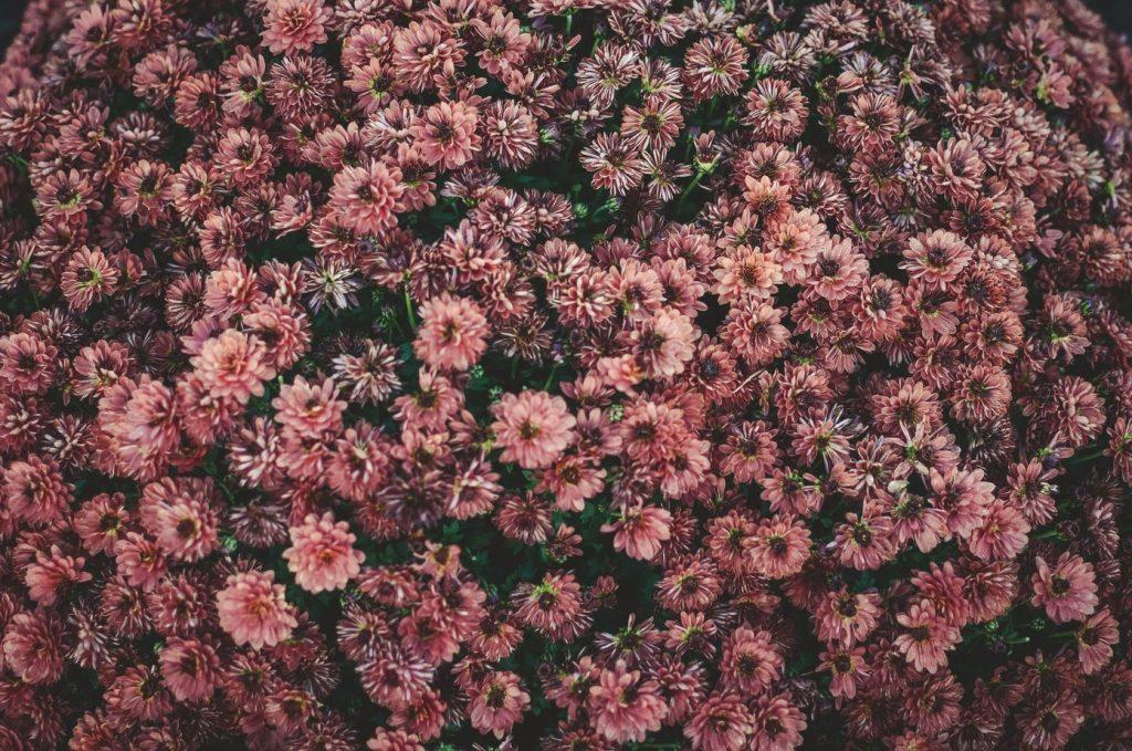 Kwiaty w kolorze różowym - Lovegarden