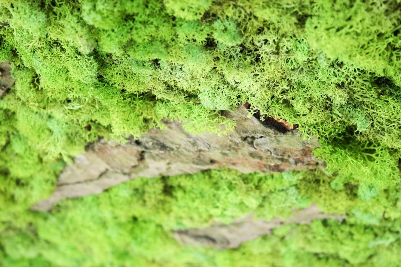 zielona ściana w domu z mchu
