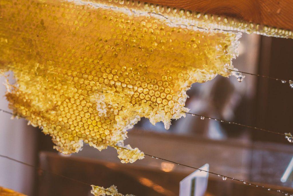 pszczoły a rośliny miododajne