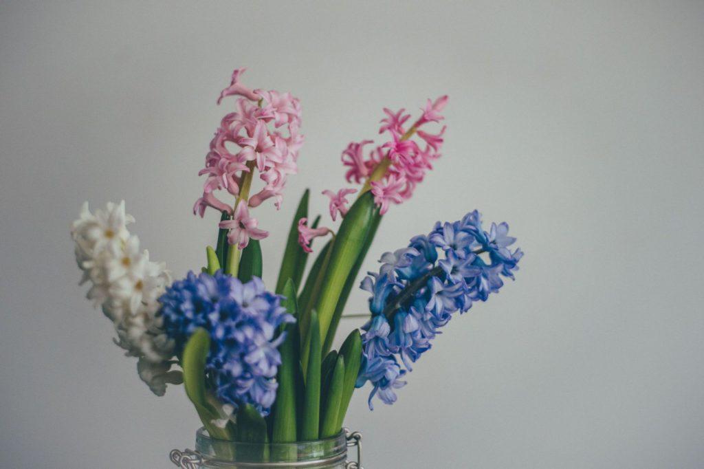 Hiacynt blog - Lovegarden