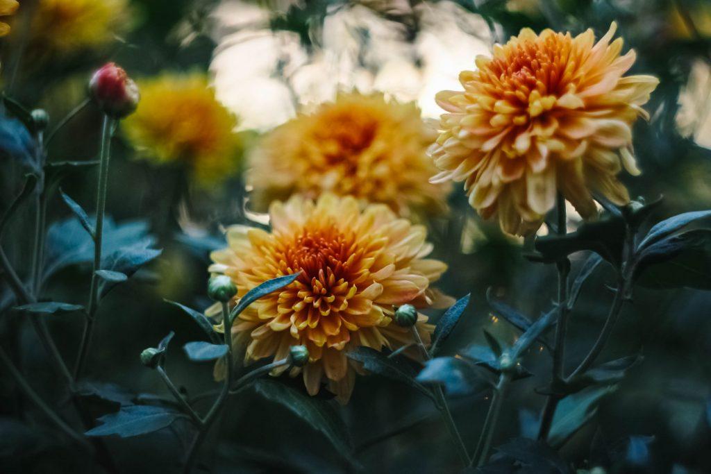 Kwiaty w kolorze żółtym - Lovegarden