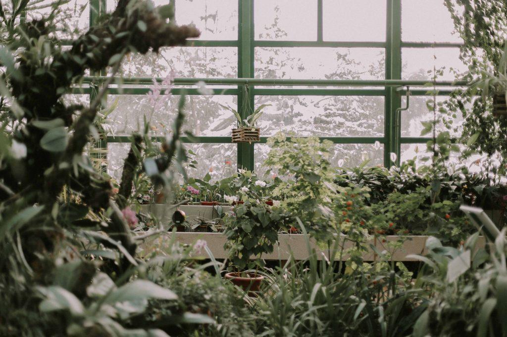 Przydomowy ogród zimowy