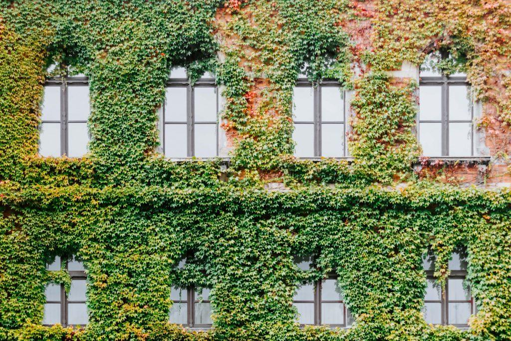 Zielone dachy i elewacje - Lovegarden