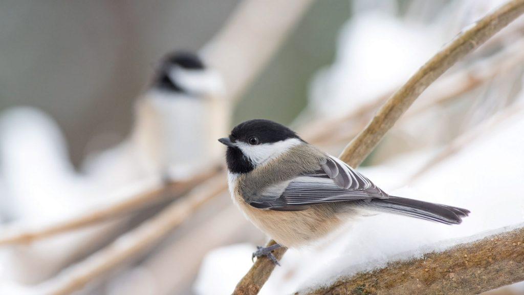 Zwierzęta zimą w naszym ogrodzie
