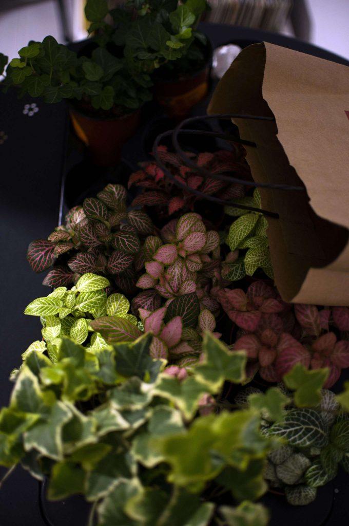 rośliny, Warsztaty tworzenia lasów w słoikach - Lovegarden