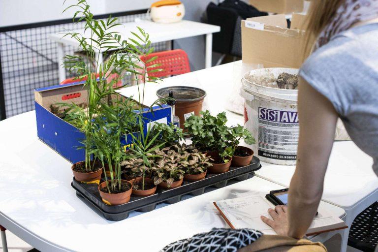 Warsztaty tworzenia lasów w słoikach