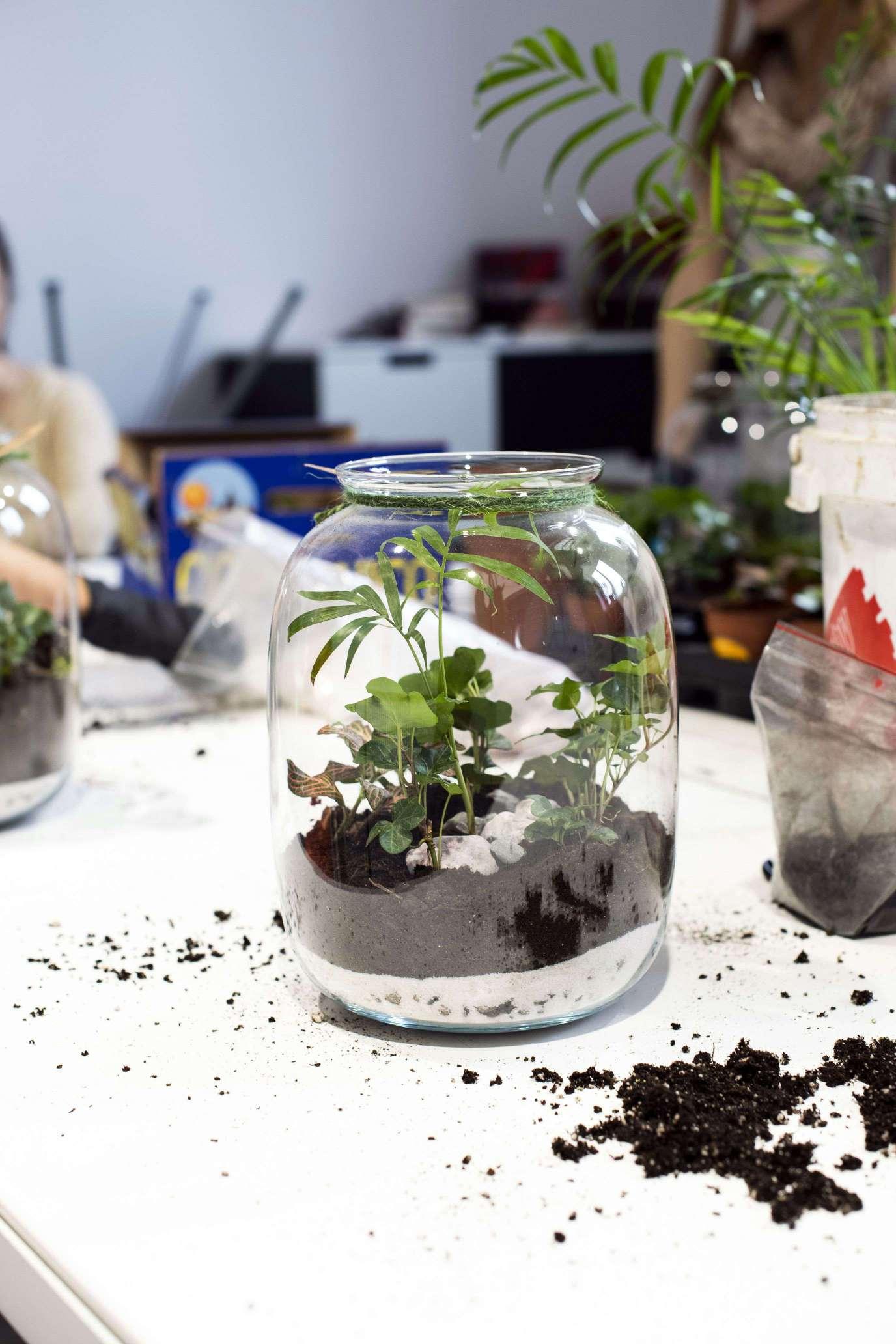 Tworzenie lasów w słoikach, warsztaty - Lovegarden